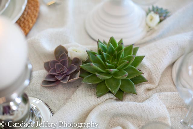 Fresh live succulents on winter wonderland table setting