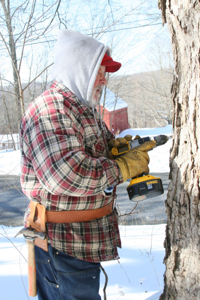 Man with gray beard and wearing flannel jacket outside tapping maple trees for maple syrup