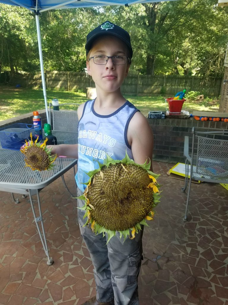 Mason holding a large sunflower head with seeds