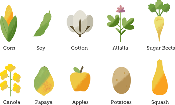 graphic of the ten plants that are GMOs
