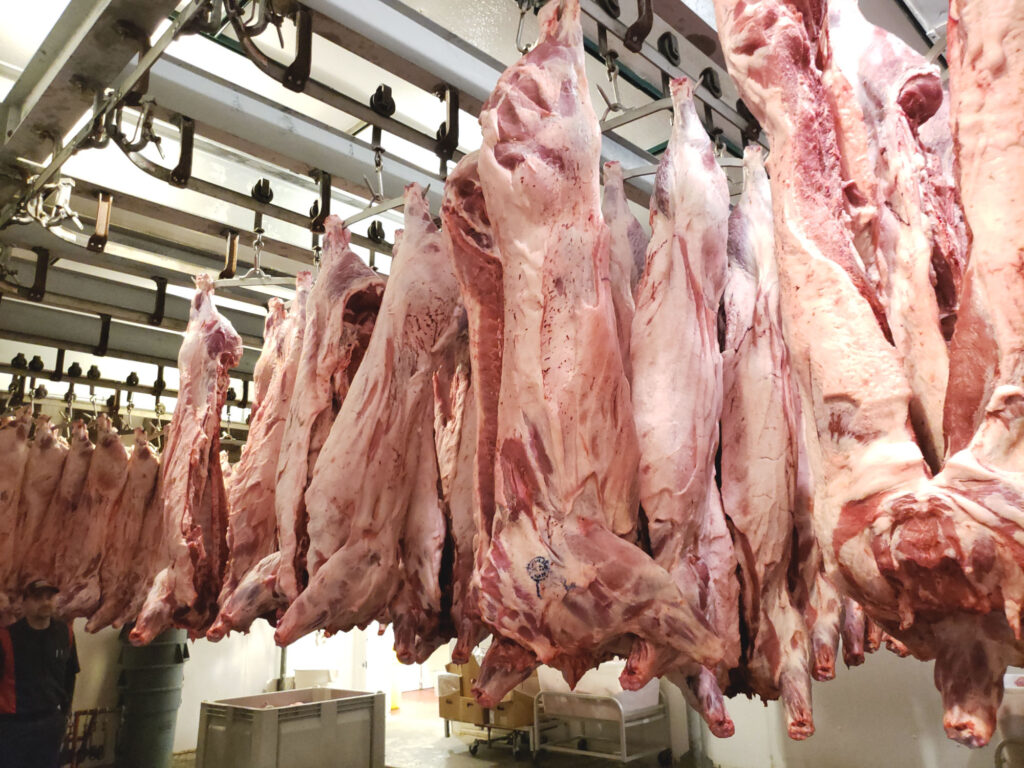 pig carcasses hanging in a slaughter house in Kansas