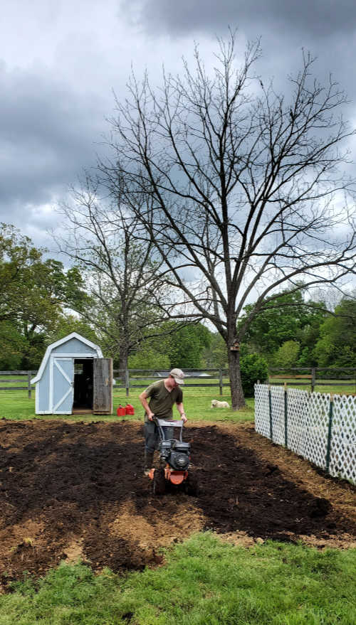 rototilling in chicken compost into vegetable garden