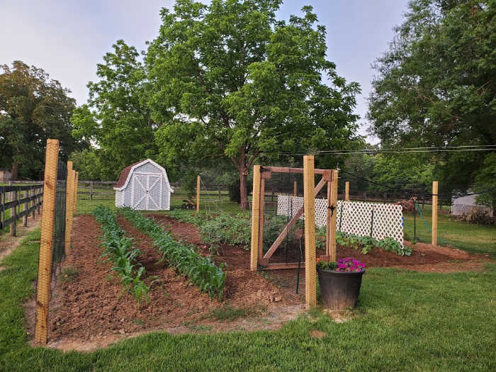 vegetable garden with fence surrounding it