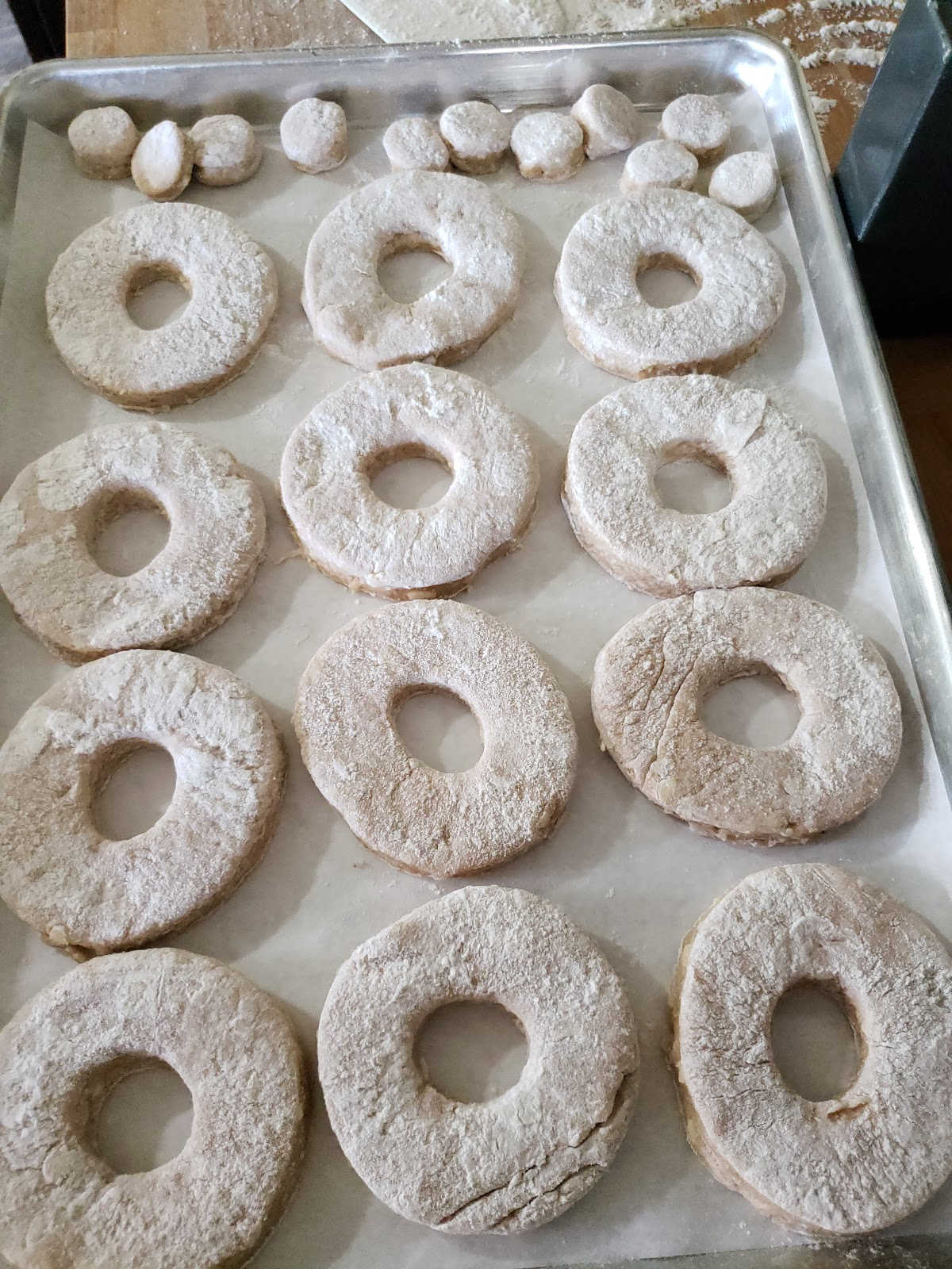 Donuts cut out on sheet pan before frying.
