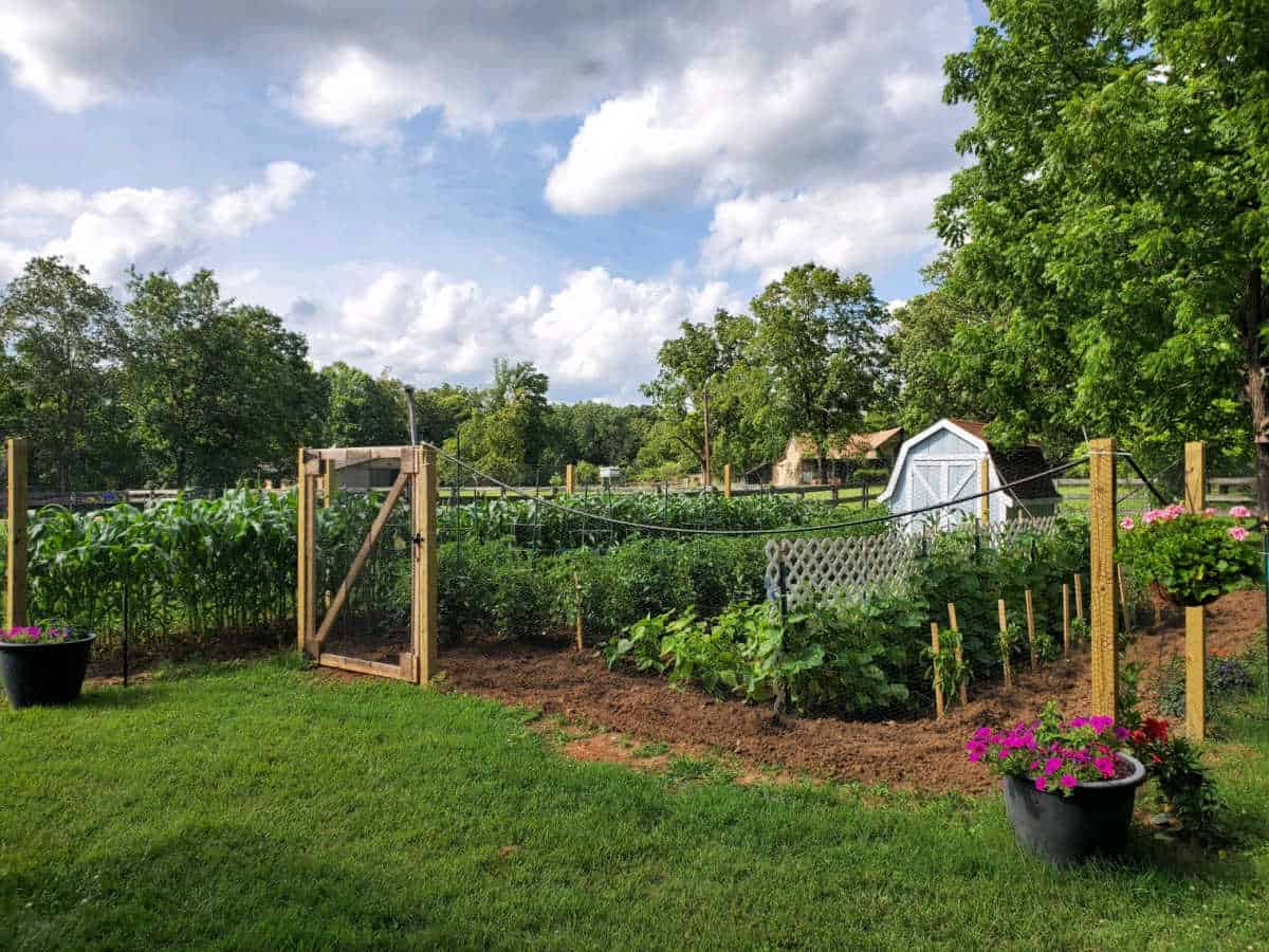 Picture of manicured vegetable garden with posts and fence around it.